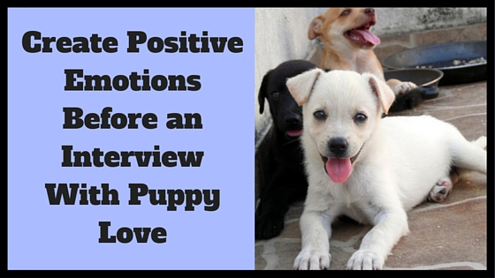 Create Positive Emotions Before an Interview with Puppy Love